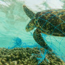 Doğayı Plastikten Korumak İçin Acilen Alınması Gereken Önlemler Neler?