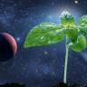 Uzayda Bitki Yetiştirebilmenin Yollarını Bulmak İçin Araştırmalar Başladı
