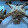 Türk Fotoğrafçının Denize Düşen Drone'undaki Görüntüler 3 Yıl Sonra Kurtarıldı