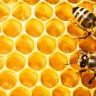 Bal Arısı Parazitleri, Arıların Kanı ile Beslenmiyormuş