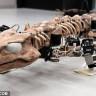 Bilim İnsanları, 290 Milyon Yıllık Fosili Robot Olarak Diriltti