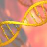 Bilim İnsanları, Genetiği Değiştirilmiş Bitkilerin Yüksek Çözünürlüklü Gen Haritasını Çıkardı