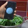 Gıda Güvenliğinde Hastalık Yapıcı Bakteri Testleri, Bilgisayar Programları Yardımıyla Yapılabilecek