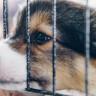 İnternet Dolandırıcılarının Yeni Yöntemi: Hayvan Sahiplendirme