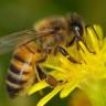 Bal Arılarının Temel Matematik İşlemlerini Öğrenebilecek Kadar Zeki Oldukları Keşfedildi