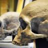 Yapay Zeka Kullanımı, İnsanın Evrimsel Geçmişindeki Boşlukları Doldurabilir