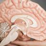 Depresyonun Beynin Daha Hızlı Yaşlanmasına Neden Olduğu Ortaya Çıktı