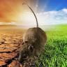 İklim Değişikliği Nedeniyle Dünyada İlk Kez Bir Memelinin Soyu Tükendi