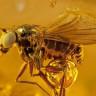 Böcek Fosillerine Ait Nefes Kesici Fotoğraflar Yayınlandı