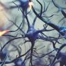 Bilim İnsanları, Nöral Kök Hücrelerini Düzenleyen Yeni Bir Mekanizma Keşfetti