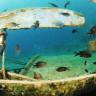 Dünyanın Bilinen En Eski Batığı Antalya Kıyılarında Keşfedildi