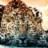 Özçekim Yapmak İçin Çitleri Aşan Kadına Jaguar Saldırdı