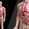 Olmasa Bile Yaşamaya Devam Edeceğimiz 7 Organ