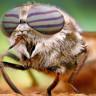 Sivrisinekleri İnsanlardan Uzak Tutacak Yeni Bir Yöntem Keşfedildi