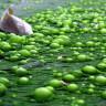 Bir Bilim İnsanı, Göllerdeki Kirliliği Azaltacak Oldukça Verimli Bir Sistem Geliştirdi