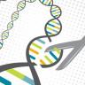 Araştırmacılar Kertenkelelerin Genlerini Düzenleyerek Albino Olmalarını Sağladı