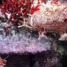 Bilim İnsanları, Okyanusun Dibinde Gökkuşağı Kadar Renkli Bir Dünya Keşfetti
