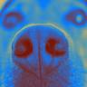 Köpekler, Kanseri Teşhis Etmede %97 Oranında Başarı Sağlıyor