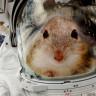 NASA'nın Uzaya Gönderdiği Fareler, Ortama Beklenmedik Şekilde Adapte Oldular (Video)