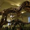 Bir Fosil Avcısı, T-Rex İskeletini eBay'de 3 Milyon Dolara Satışa Çıkardı