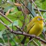 Endonezya'da İki Yeni Kuş Türü Keşfedildi