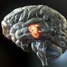 Bilim İnsanları, Beyin Sinyallerini Konuşma Sesine Çeviren Bir İmplant Geliştirdi