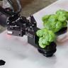 Robot Çifftiği Girişimi Iron Ox, Ürünlerini Satmaya Başladı