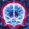 İnsan Hücreleri Kullanılarak Mini Bir Beyin Kopyalandı