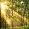Ağaç ve Bitkilerin Birbirlerine Bağlı Olduğu Bir 'Sosyal Ağ' Keşfedildi