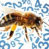 Arıların Rakamları ve Sayıları Anlayabildikleri Keşfedildi