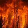 Bir Orman Yangının İçinden Çekilen Dehşet Verici Görüntüler (360 Derece Video)