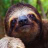 Dünyanın En Hareketsiz Canlısı Tembel Hayvanlarla İlgili Ufuk Açan TED Konuşması