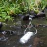 Bilim İnsanları, Nehir Yaşamını Korumak İçin 4 Aşamalı Bir Plan Tasarladı