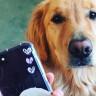 iOS 13'le Birlikte iPhone'lar, Evcil Hayvanları Tanıyabilecek