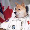 """""""Astronotların Sağlığı İçin Uzaya Daha Fazla Köpek Gönderilmeli"""""""