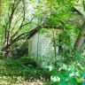 Çernobil'deki Nükleer Felaketten Sonra Bitkiler Neden Ölmedi?