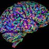 Sinirsel Aktivite Gerçekleştirebilen Bir Yapay Beyin Tasarlandı