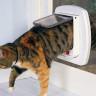 Amazon Mühendisi, Kedisiyle Yaşadığı Sorun İçin Yapay Zekalı Bir Kedi Kapısı Geliştirdi