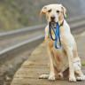 Çin'de Kaybolan Köpekleri 'Burun İzleri' Sayesinde Bulan Bir Yapay Zeka Geliştirildi