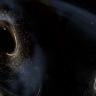Fizikçiler, Neden Kimsenin Karanlık Maddeden Ölmediğini İnceliyor