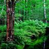 Ağaçlar Hakkında Tüm Bildiklerimizi Sorgulatacak Zombi Ağaç Keşfi Yapıldı