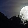 Uydumuz Ay'ın Genetiğimizi Değiştirdiğini Kanıtlayan Hayvan Türü