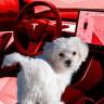 Tesla, Araçlarındaki 'Köpek Modu' ile İlgili Sorunu Düzeltti