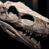 4 Metre Uzunluğunda Olduğu Düşünülen Yeni Bir Dinozor Türü Keşfedildi