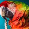 Dünyanın Bilinen En Büyük Papağanının Kalıntıları Bulundu