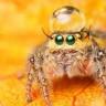 Evinizde Gördüğünüz Örümcekleri Neden Öldürmemeniz Gerekiyor?