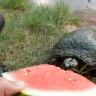 Bir Kaplumbağanın Başrolde Olduğu İlginç ASMR Videosu