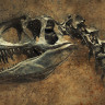 Bilim İnsanları, Nesli Tükenmiş Canlıların Doku Anatomisini Yeniden İnşa Edebilecek