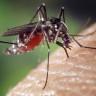 Sivrisinek Isırıklarına Karşı Çok Özel Bir Yöntem Bulundu