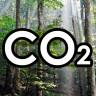 Bazı Ağaçlar, Sıcaklarda Oksijen Yerine Karbondioksit Salınımı Yaptı